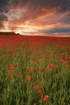 Photograph - Poppies At Dusk by John Chivers
