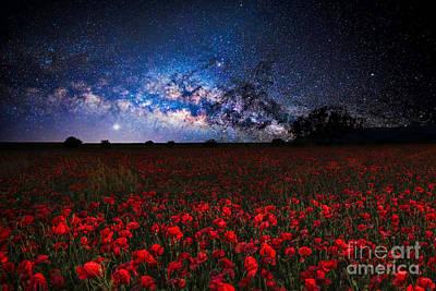 Poppies At Night Art Print by Sebastien Coell