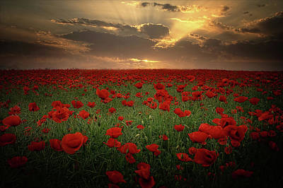 Poppies At Sunset Original by Albena Markova