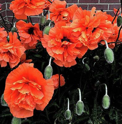 Photograph - Poppies by David Pantuso