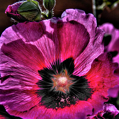 Florals Photograph - Poppies by David Patterson