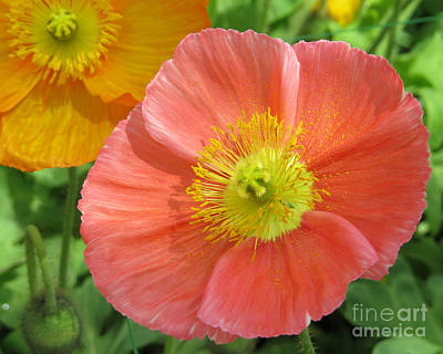 Photograph - Poppies by Dawn Gari