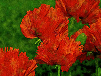 Photograph - Poppies Defining Space V2 by Lynda Lehmann