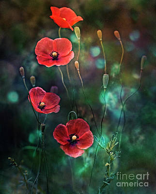 Photograph - Poppies Fairytale by Ezo Oneir