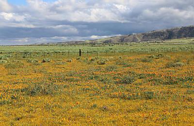Photograph - Poppies Field In Antelope Valley by Viktor Savchenko