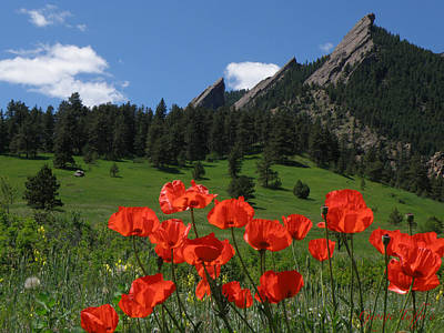 Photograph - Poppies Flatirons by George Tuffy
