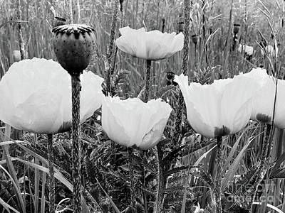 Photograph - Poppies In B/w by Steven Parker