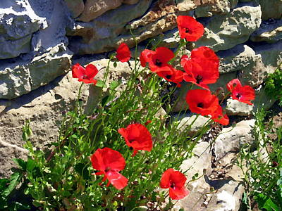 Photograph - Poppies In Fiesole by Jacqueline M Lewis