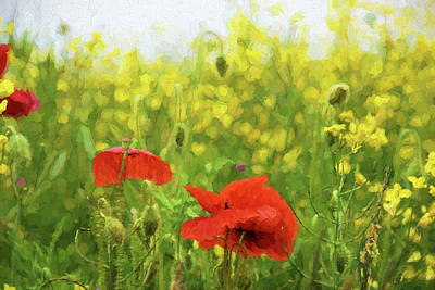 Photograph - Poppies In Rape by Ron Harpham