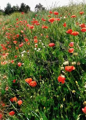 Photograph - Poppies In The Landscape by Dorothy Berry-Lound