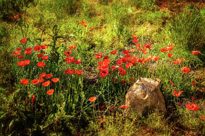 Photograph - Poppies In The Meadow by Carolyn Derstine