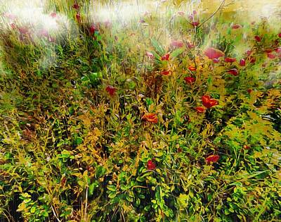 Photograph - Poppies In The Mist by Dorothy Berry-Lound