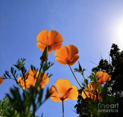 Photograph - Poppies In The Sky by Johanne Peale