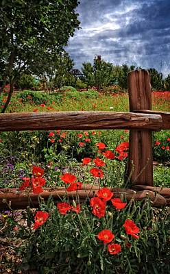 Poppies In The Texas Hill Country Art Print by Lynn Bauer