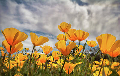 Photograph - Poppies In The Wind Part Two  by Saija Lehtonen