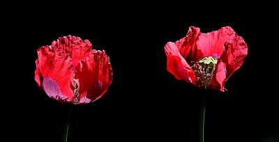Photograph - Poppies by John Topman