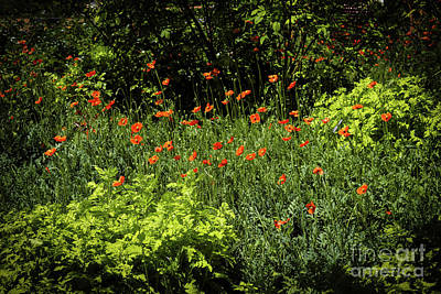 Photograph - Poppies by Jon Burch Photography