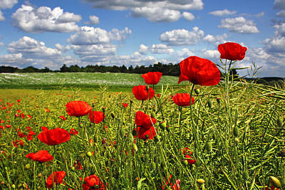 Photograph - Poppies by Ken Brannen
