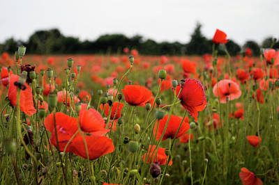 Photograph - Poppies by Leah Palmer