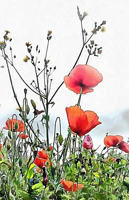 Photograph - Poppies Like Paper In The Breeze by Dorothy Berry-Lound