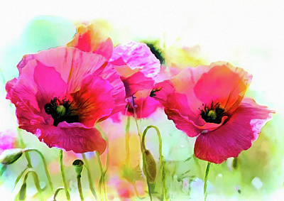 Mixed Media - Poppies by Lilia D