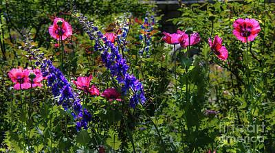 Photograph - Poppies by Lisa L Silva