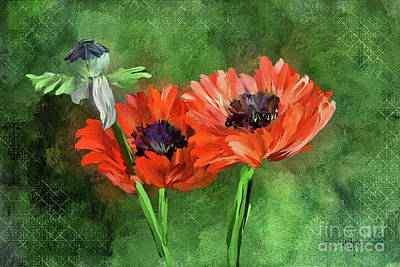 Digital Art - Poppies by Lois Bryan