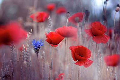 Poppy Photograph - Poppies by Magda Bognar