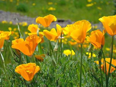 Poppies Meadow Summer Poppy Flowers 18 Wildflowers Poppies Baslee Troutman Art Print by Baslee Troutman