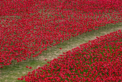 Of Artist Photograph - Poppies Of Remembrance by Martin Newman