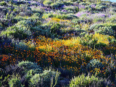 Photograph - Poppies On A Hillside by Glenn McCarthy Art and Photography