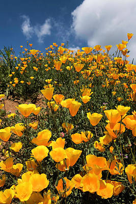 Photograph - Poppies On A Sunny Day 2 by Scott Cunningham