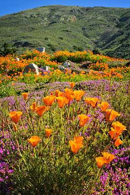 California Photograph - Poppies On Pacific Coast Highway by Lynn Bauer