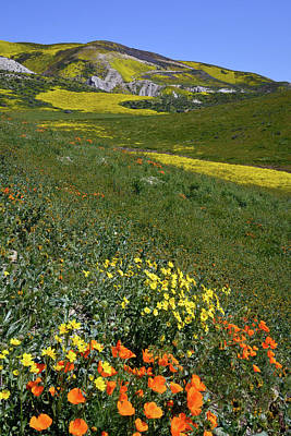 Fiddleneck Photograph - Poppies On The Carrizo Plain 2 by Kathy Yates