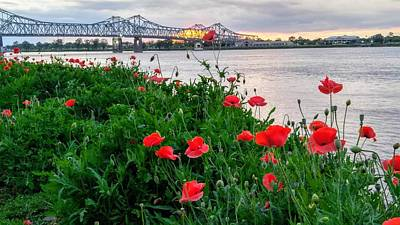 Photograph - Poppies On The Mississippi by Rosanne Licciardi