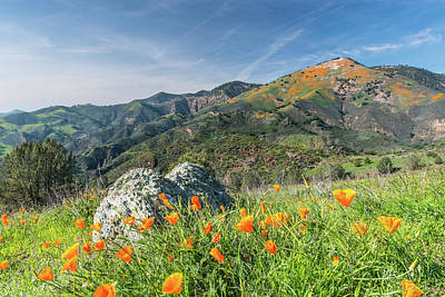 Photograph - Poppies On The Mountain by Paul Johnson