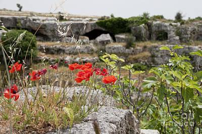 Photograph - Poppies On The Rocks by Leonardo Fanini