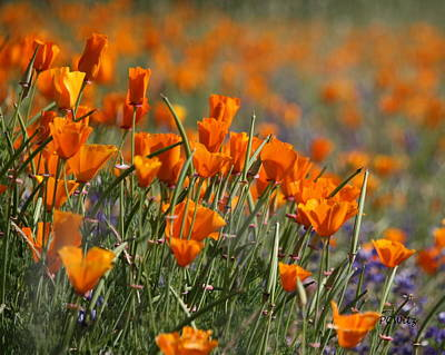 Art Print featuring the photograph Poppies by Patrick Witz