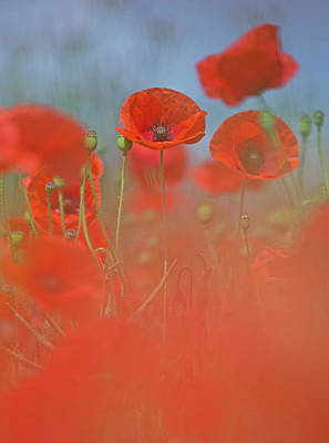 Photograph - Poppies by Peter Walkden