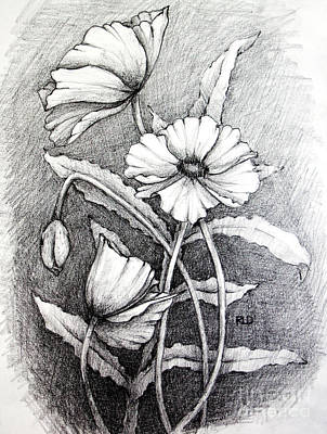 Drawing - Poppies by Rebecca Davis