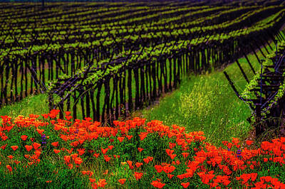 Photograph - Poppies Spring Vineyards by Garry Gay