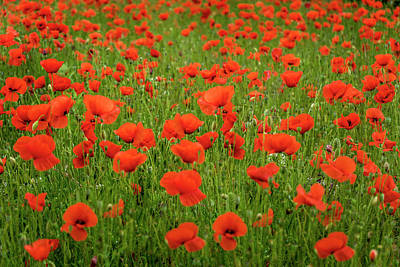 Photograph - Poppies St Remy France_dsc5881_16  by Greg Kluempers
