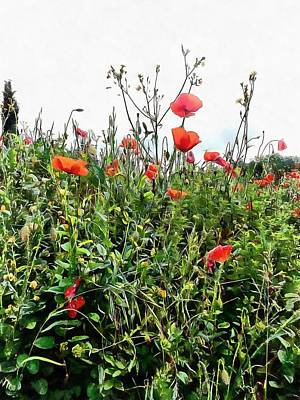 Photograph - Poppies Tower Above You by Dorothy Berry-Lound