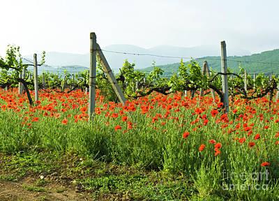 Photograph - Poppies, Vineyards And Hills by Irina Afonskaya