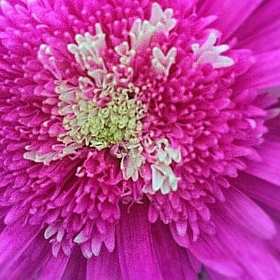 Photograph - Popping Pink Petals  by Ellen Levinson
