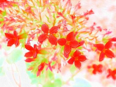 Photograph - Popping Red Blooms by Belinda Lee