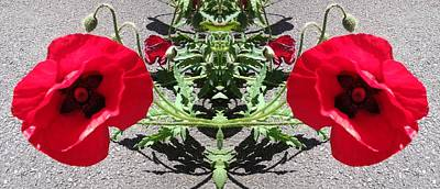 Photograph - Poppy 1149 Mirror Image by Julia Woodman