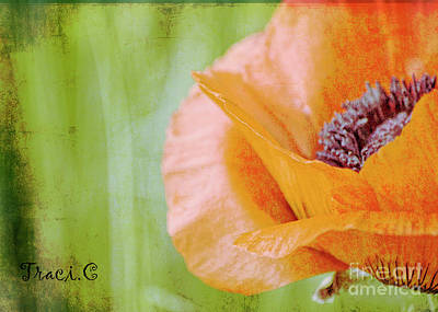 Photograph - Poppy 9 by Traci Cottingham