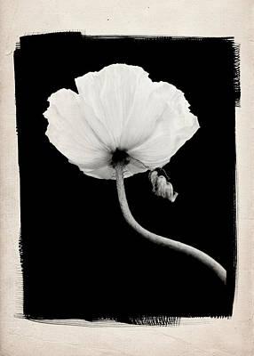 Poppy A Art Print