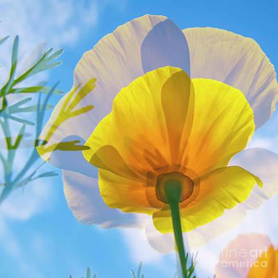 Abstract California Poppies Photograph - Poppy And Sun by Veikko Suikkanen